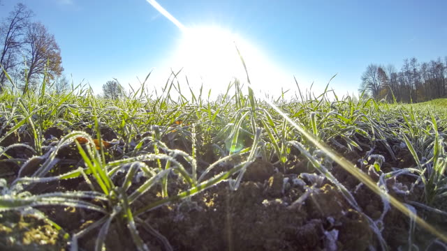 HD TIME-LAPSE: Grass Awakening In The Spring video