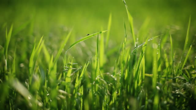 Grass background video
