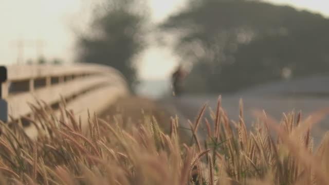 stockvideo's en b-roll-footage met gras naast de weg-achtergrond - blue sky