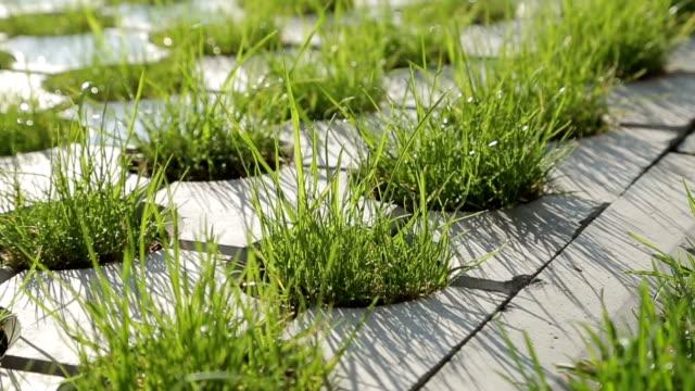 Grass between stones video