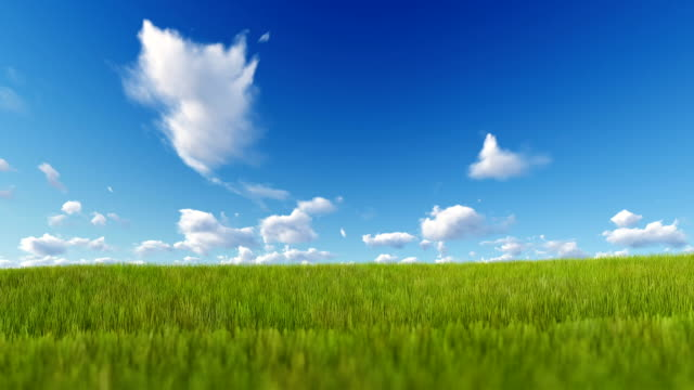 grass blowing over blue sky, luma matte attached - grass stock videos & royalty-free footage