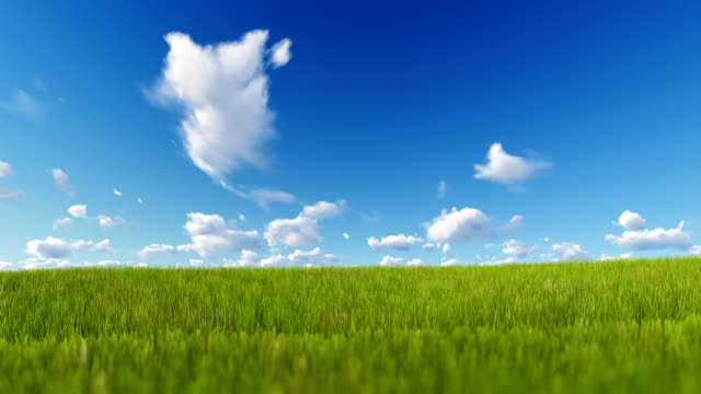 grass blowing over blue sky - grass isolated video stock e b–roll