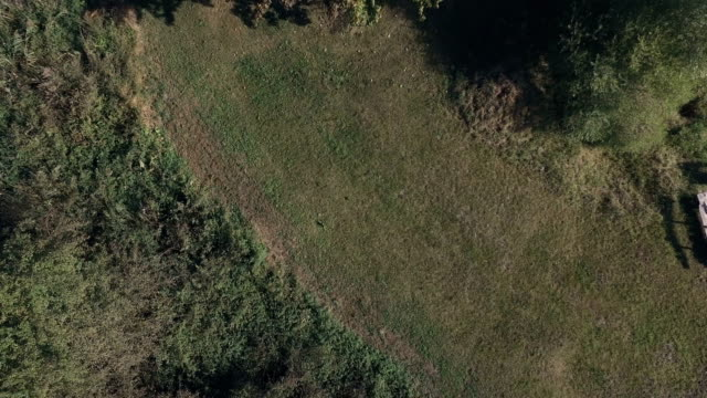 Grass Close Up From a Drone video