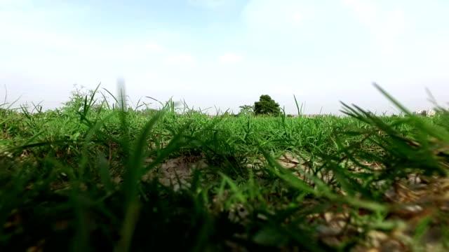 vidéos et rushes de herbe gros plan - couleur saturée