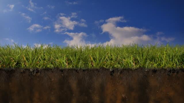 Grass Earth Cross Section