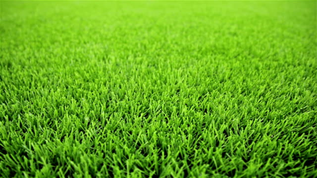 Grass field. Close-up, horizontal slider shot
