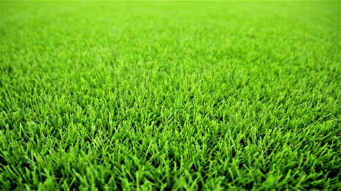 grass field.  nahaufnahme, horizontale schieberegler aufnahme - gras stock-videos und b-roll-filmmaterial