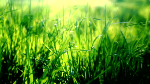 Grass field video