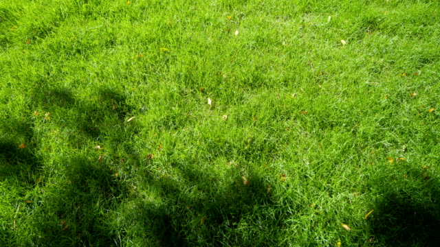 grass field grass field with shadow of a tree blade of grass stock videos & royalty-free footage