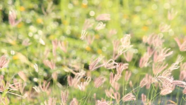 Grass flower against wind