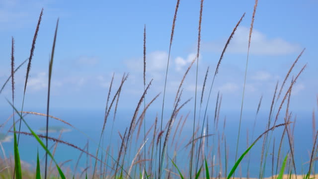 Grass Flower In Nature On Ocean Sea Background.