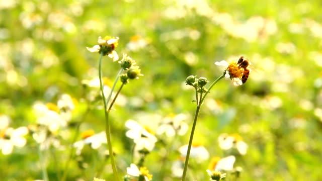 gräs blommor och bee i fältet - pollinering bildbanksvideor och videomaterial från bakom kulisserna
