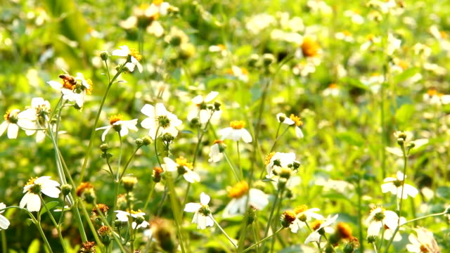 Grass flowers and bee in the field Grass flowers and bee in the field pollination stock videos & royalty-free footage