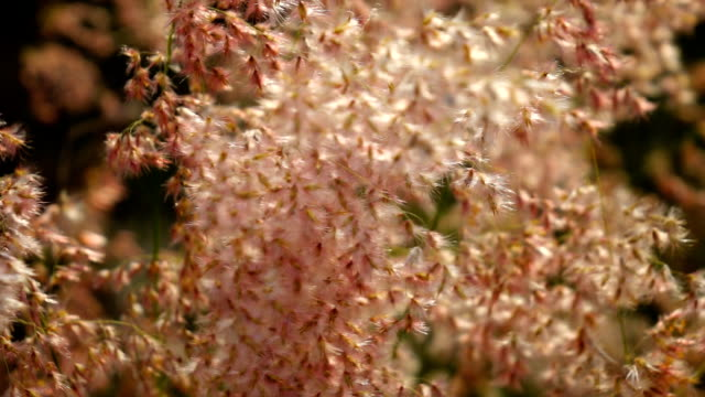 Grass flowers sunset background,Slow motion video