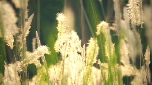 gräs blommor solnedgång - abstract silhouette art bildbanksvideor och videomaterial från bakom kulisserna