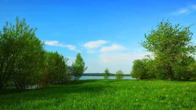 Grass glade near river video