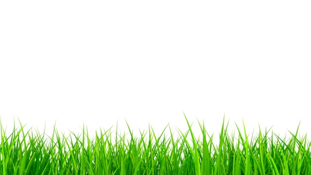 grass growing timelapse with alpha matte isolated on white