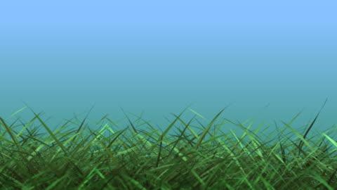vidéos et rushes de herbe hd, loop - format hd