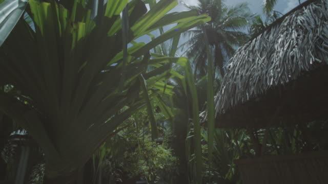 vídeos y material grabado en eventos de stock de cabañas de hierba en la isla del pacífico sur. - micronesia