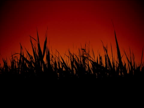 stockvideo's en b-roll-footage met grass in a wind - {{asset.href}}