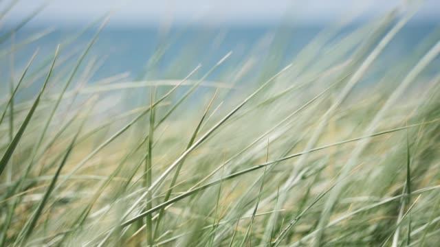 vídeos de stock e filmes b-roll de grass in front of the beach, slow motion - relva