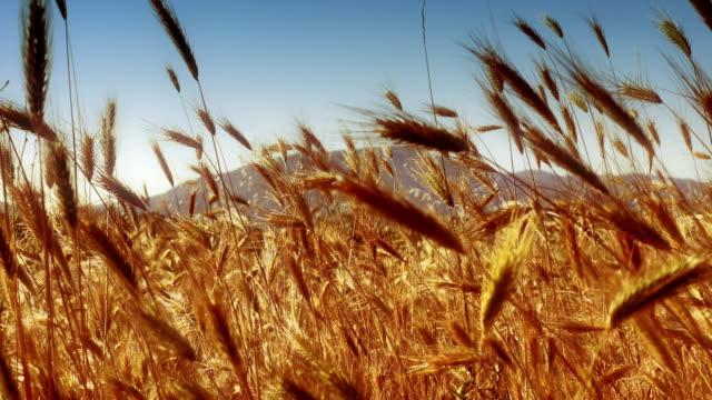grass in meadow 4k - prateria zona erbosa video stock e b–roll