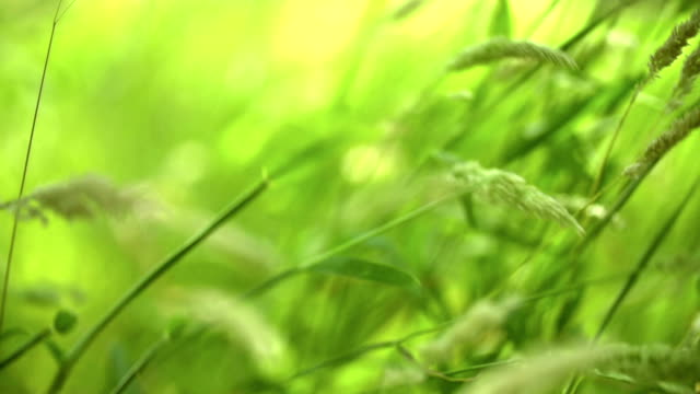 Grass in slow motion video