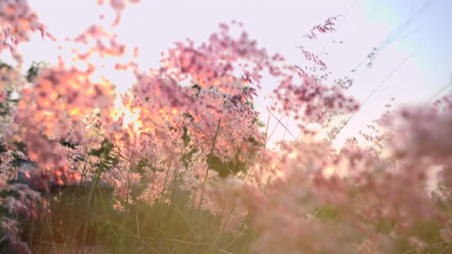 grass in sunset light slow motion - flowers стоковые видео и кадры b-roll