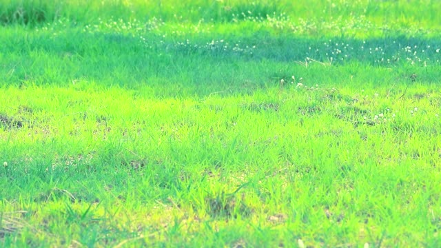 grass in the field and sunlight in the morning