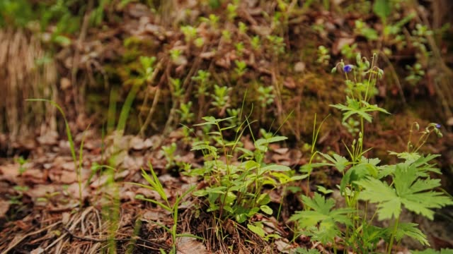 grass in the forest in the mountains. close up. natural beauty. serenity. - quadcopter filmów i materiałów b-roll
