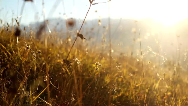 Grass in the mountains during a sunset video