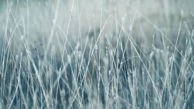 vídeos y material grabado en eventos de stock de hierba en el viento - pegajoso