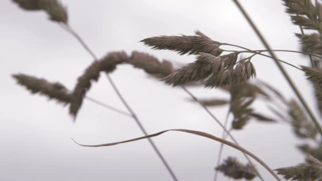 Grass in the Wind video