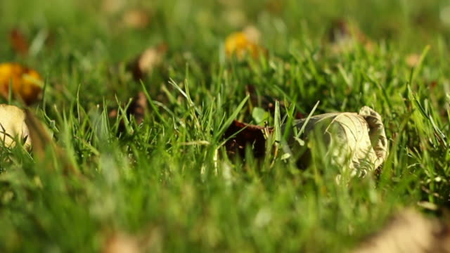 Grass in wind Moving grass in the wind, slide move, macro shot blade of grass stock videos & royalty-free footage