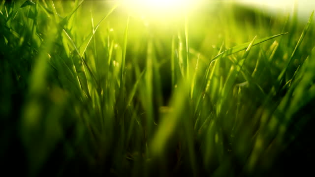 grass in wind (loopable) - grass stock videos & royalty-free footage