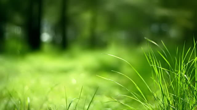 Grass in wind (loopable) Swaying green grass. Shallow depth of field. blade of grass stock videos & royalty-free footage