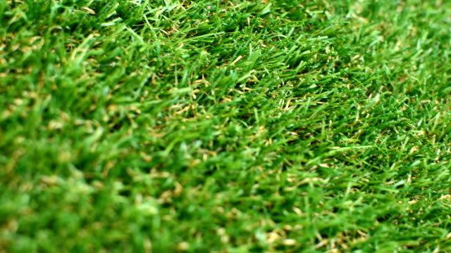 Grass Lawn Detail angled video