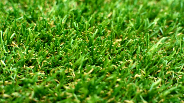 Grass Lawn Detail front to back video