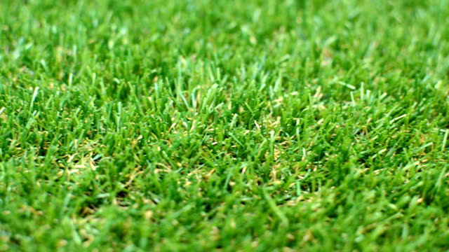 Grass Lawn Detail, shallow depth of field video