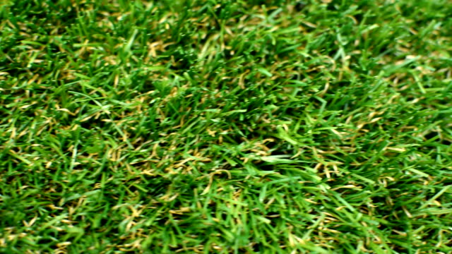 Grass Lawn Detail video