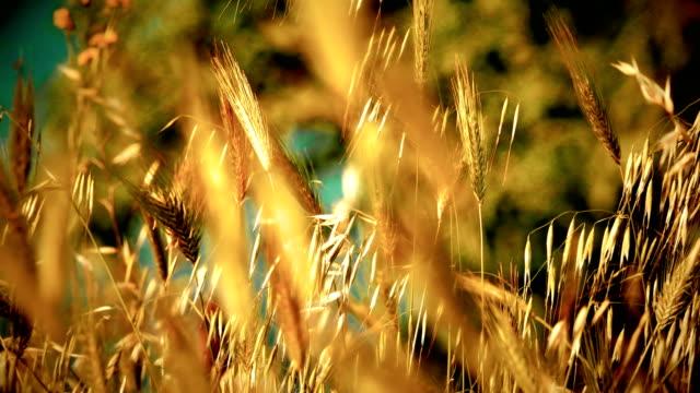 grass on field macro 4k - white background стоковые видео и кадры b-roll