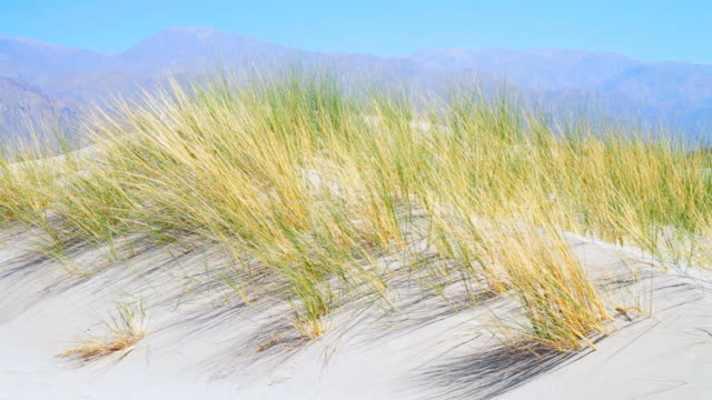 Grass on Sand Dunes video