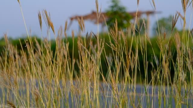 vídeos de stock e filmes b-roll de grass on the roadside sway in the wind - berma da estrada