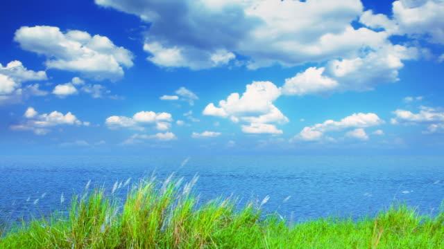 Grass, pond and sky video