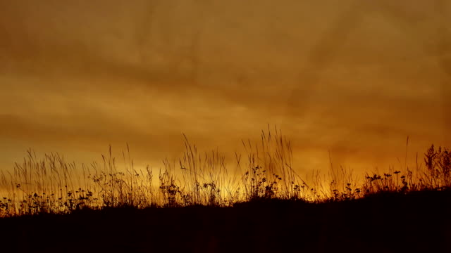 grass silhouettes background with sun set the nature lifestyle - vídeo