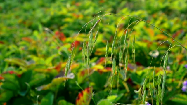 Grass summer day. video