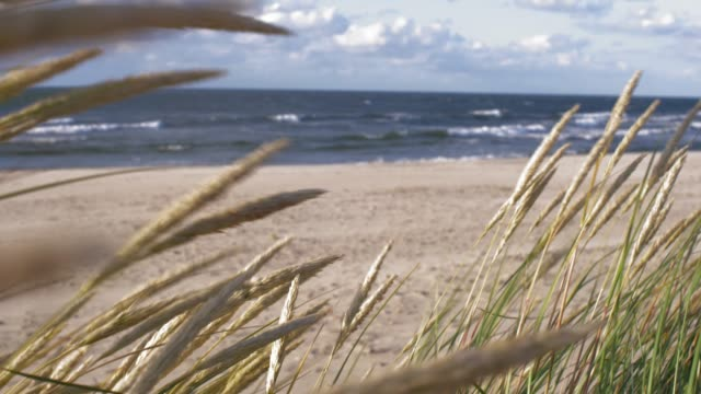 grass swinging on wind on sandy sea beach at baltic sea coast - polonia video stock e b–roll