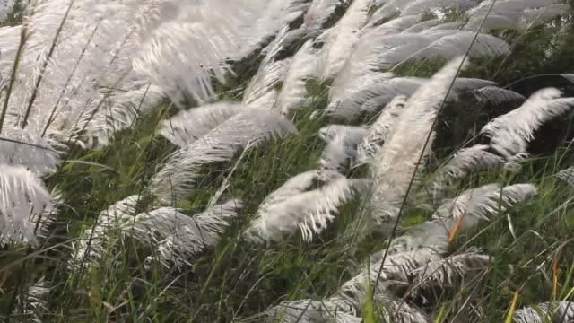Grass undergrowth.