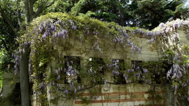 vídeos de stock e filmes b-roll de grass vertical growing pattern on wall in park - ivy building
