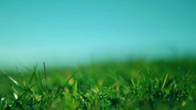 잔디 - 초점 이동 스톡 비디오 및 b-롤 화면
